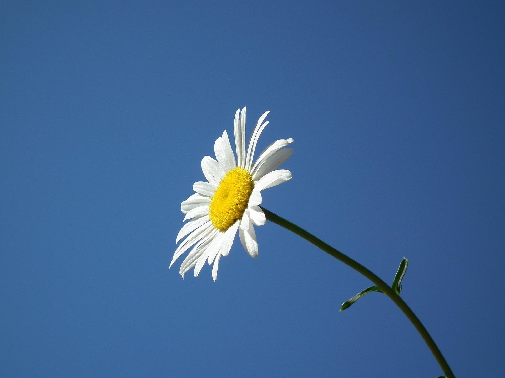 flower-193452_1920